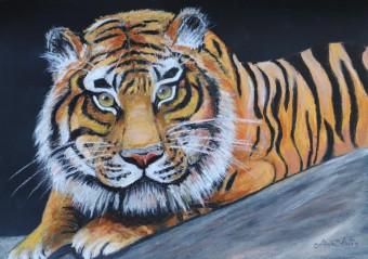 Tiger, Ölpastell, 29x42 cm